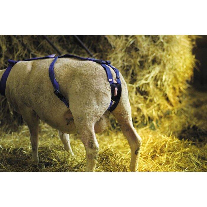 Bandage prolapsus en nylon avec pessaire pour ovins-152562_copy-30