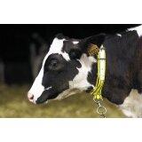 Collier pour veaux en nylon jaune / noir-152174_copy-20