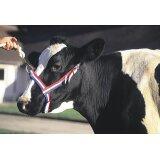 Licol en nylon bleu / blanc / rouge pour vaches-152278_copy-20